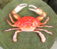 10 inch steamed blue crab decor