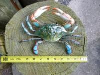 """10"""" crab plastic"""