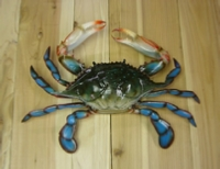 "17"" blue crab replica"