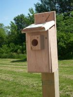 bluebird house with screen opening to view