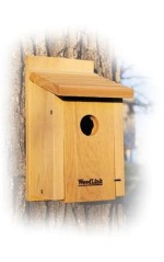 simple bluebird house for sale
