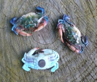 Miniature blue crabs with magnet