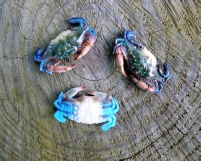 "2"" plastic crabs for crafts"