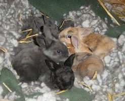baby_bunnies.jpg