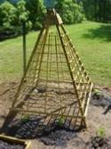 Gardening Project Cucumber Trellis