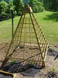 How to Build a Cucumber Trellis.