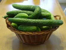 basket full of cucumbers