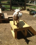 woodworking plans for a goat stand