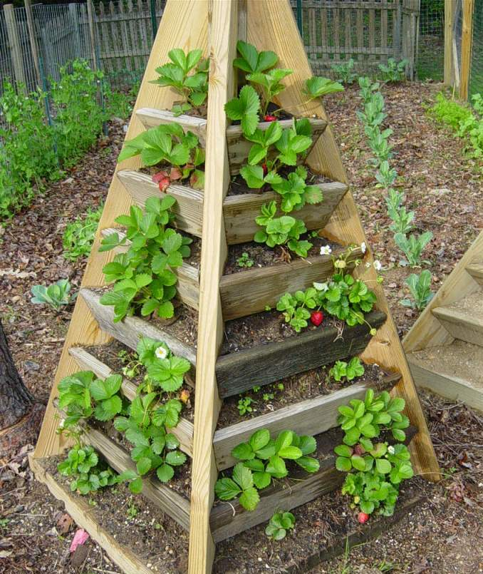 Pyramid Planter Plans http://www.chesapeakecrafts.com/STRAWBERRY_TOWER.php