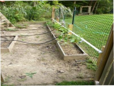 garden soaker hoses from rain barrel.