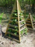 How to build a strawberry pyramid planter. Towers 3 and 6 ft. tall.